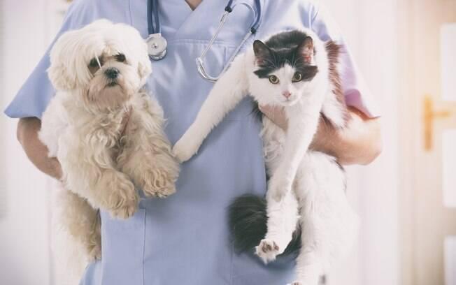 Sempre leve o animal ao veterinário quando demonstrar sintomas de doenças