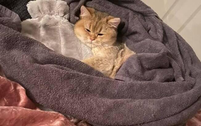 Gato de KL após acidente