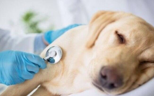 Seu cão está com tosse? Pode ser uma sintoma ou uma doença
