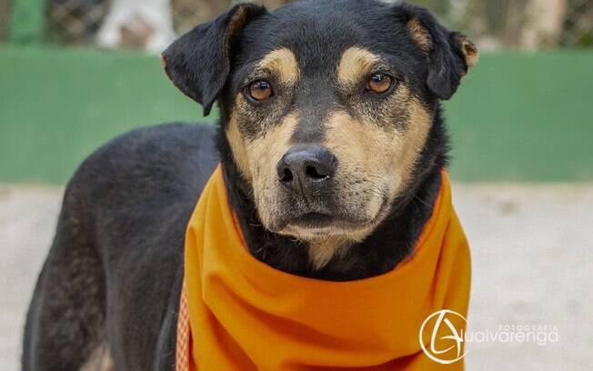 Lollo é um dos cachorros para adoção da ONG Anjos dos Bichos