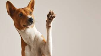 Cães entendem 165 palavras em média, segundo estudo