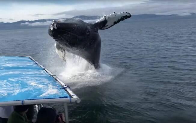 Turistas estavam de olho em outra baleia-jubarte quando foram surpreendidos por salto próximo ao barco