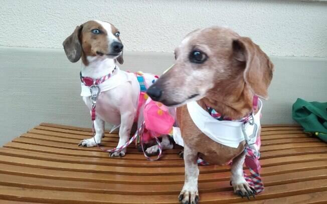 cadelas em cima do banco