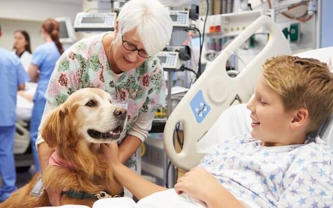 A terapia assistida por animais tem sido muito utilizada em tratamentos de doenças