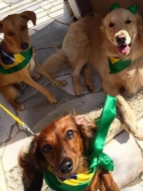 Conheça os cães mais estiloso da Copa do Mundo 2018 eleitos pela DogHero
