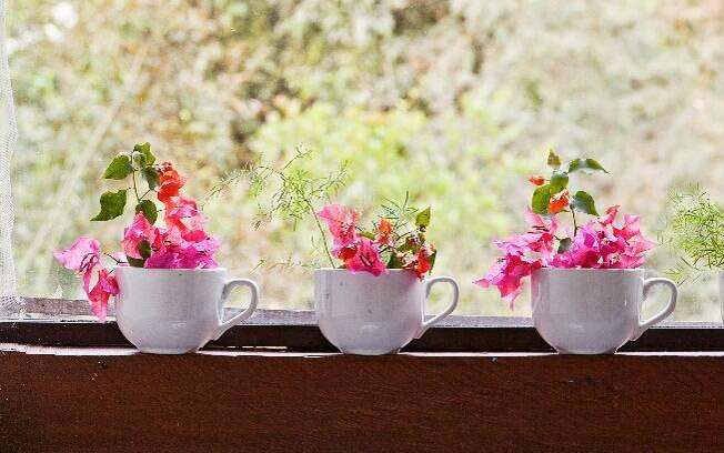 Decoracao interiores plantas - Imagenes de plantas de interior ...