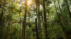 Governo quer pagar ruralistas que preservarem florestas
