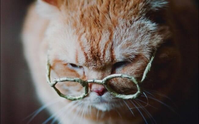 A maioria das doenças que atinge os gatos idosos não aparecem durante a juventude, por isso o dono deve ficar mais atento