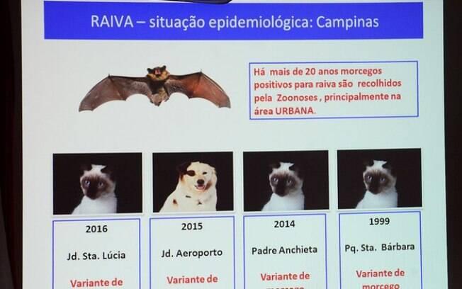 Após casos de morcego com raiva, veja o que fazer se encontrar