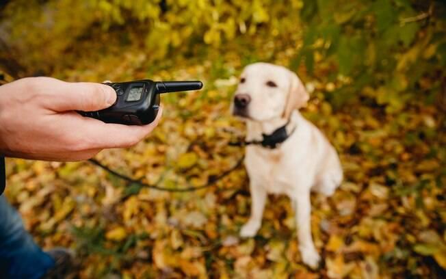 Algumas pessoas ainda utilizam esses colares para adestrar seus pets e resolver problemas de comportamento, mas não é um objeto recomendado