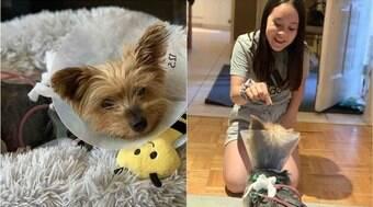 Cachorro yorkshire enfrenta coiote para proteger menina de 10 anos