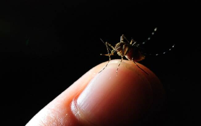 Melhor forma de se prevenir continua sendo evitar contato com mosquito Aedes aegypti