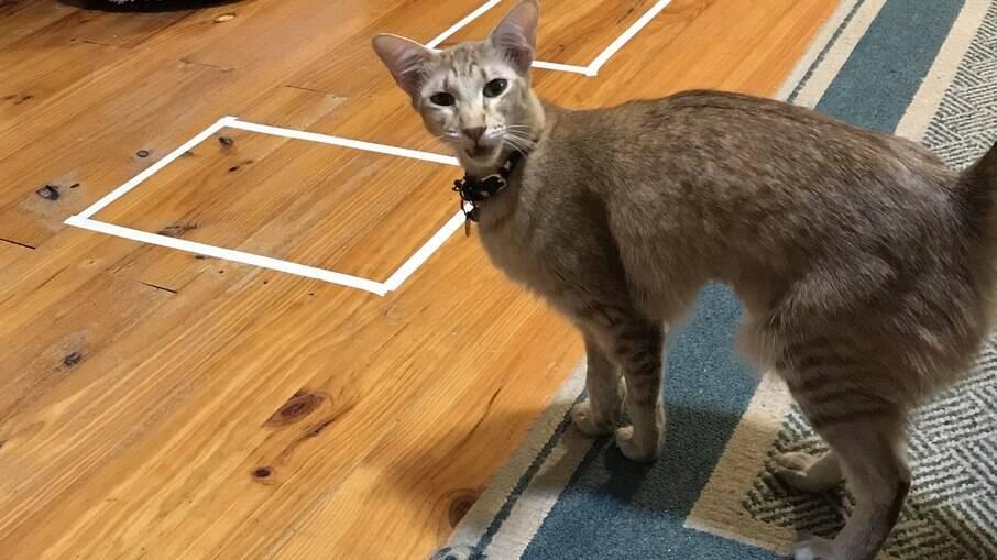 Nem todos os gatos são iguais, como mostra essa gatinha chatada Etta