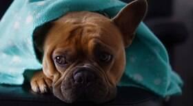 Frio pode piorar quadro de cães que sofrem com dores; atente-se