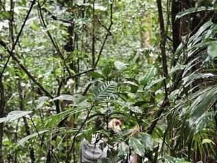 """""""16 mm"""".  Filme de Steegmann mostra um percurso em linha reta através de uma floresta brasileira"""