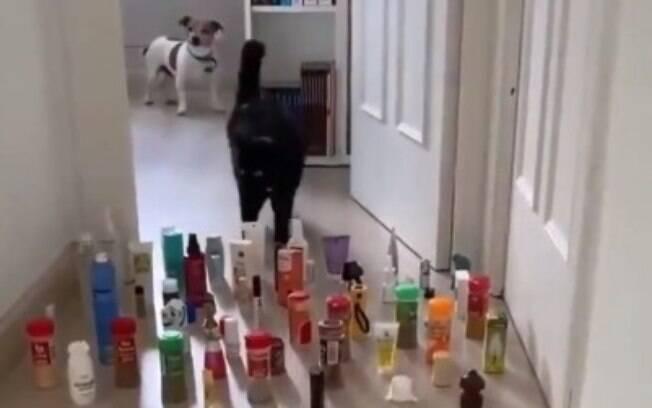 Vídeo compara comportamento de gato e cão