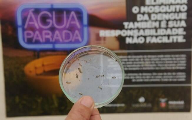 Ações de combate ao Aedes aegypti começam nesse domingo (25)