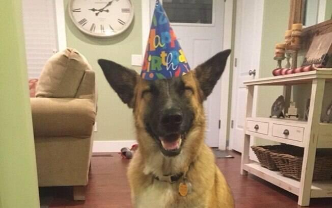Um cachorro feliz no seu aniversário.
