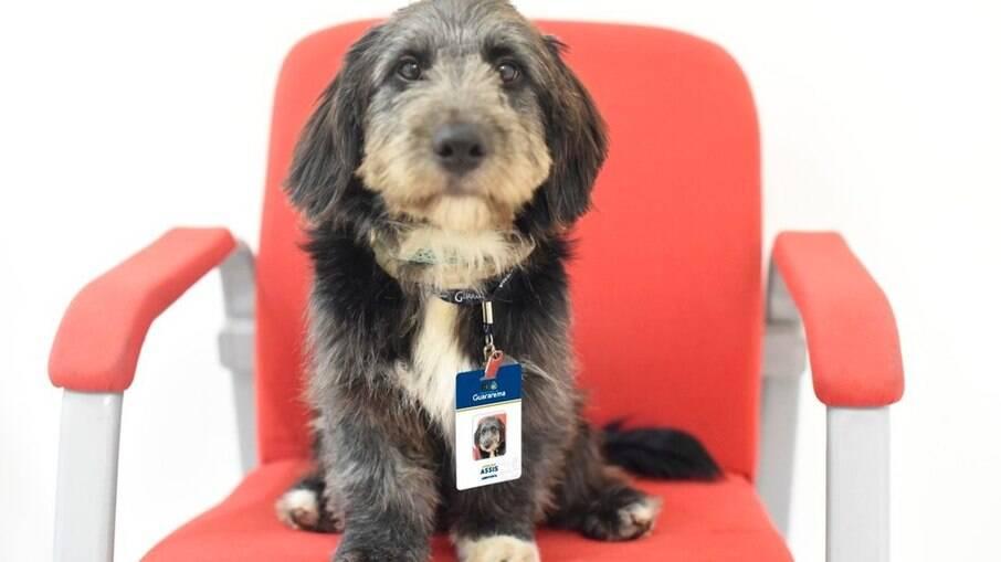 Cão devolvido ao abrigo é adotado e vira funcionário do CAPS de Guararema
