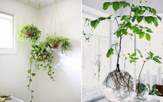 Na hora de distribuir plantas pela casa, uma boa ideia é variar os vasos e posicioná-las de formas diferentes