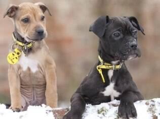 Pudding e Brandy foram abandonados na neve após o Natal