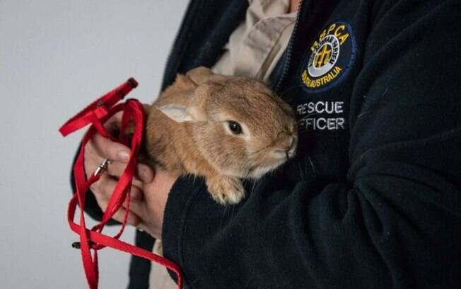 Polícia Federal Australiana foi chamada até aeroporto devido suspeita de bomba, encontrando coelho no lugar de explosivo