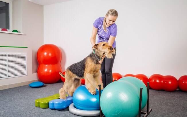 Além de permitir a pratica de exercícios, a academia para cães melhora a capacidade mental, instintiva e sensorial do pet
