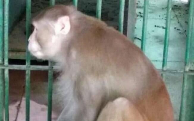 Animal foi capturado e está em um zoológico.
