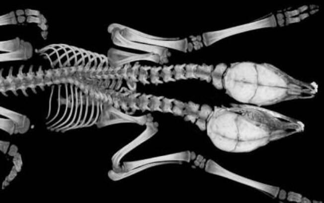 Pesquisadores da Universidade da Geórgia estudaram anatomia da criatura e continham funções separadas