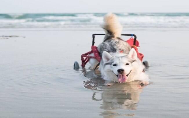 Maya fazendo o que mais gosta: nadando