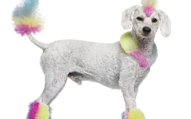 É preciso ter muito cuidado se deseja pintar seu animal de estimação para não comprometer sua saúde
