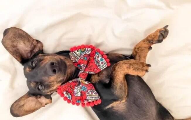 Cachorrinho deitado em um lençol