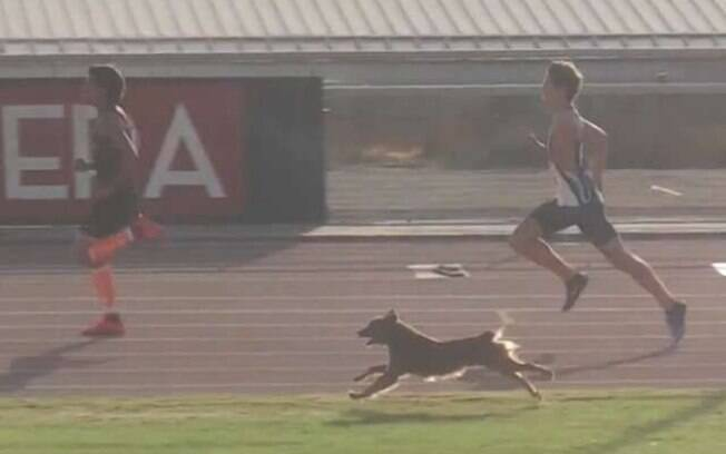 Cão invade corrida, ultrapassa os atletas e vence competição. O divertido incidente aconteceu na Competição Nacional de Atletismo do Chile, na pista de atletismo de San Carlos de Apoquindo
