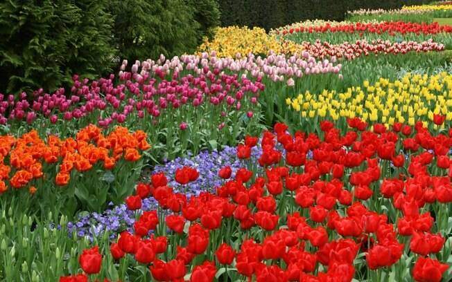 flores jardim do mar : flores jardim do mar:Seis jardins incríveis – Destinos Internacionais – iG