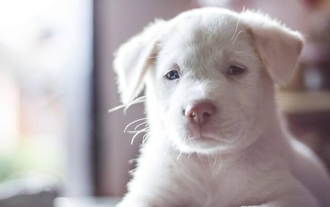 Cachorrinho albino
