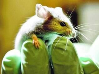 A nova medicação teve êxito em ratos, segundo os pesquisadores