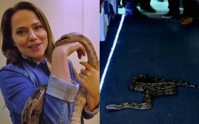 Vivianne Pasmanter e a cobra