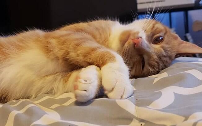 Filhote de gato chamado Chewbacca