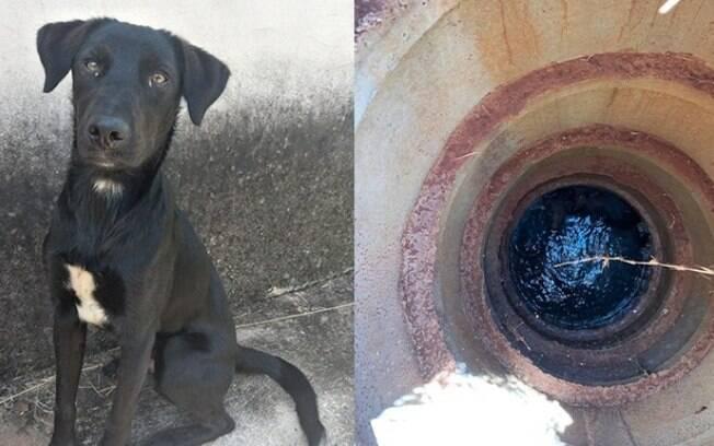 Cachorro é resgatado após cair em rede de esgoto