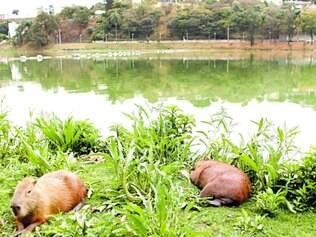 Moradia. Animais sobem para jardins residenciais à noite