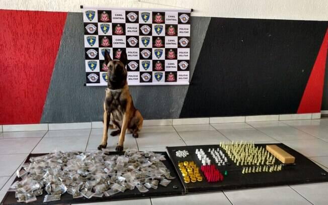 Canil da PM apreende drogas em São Paulo