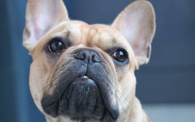 O dono de um buldogue francês foi condenado a pagar R$ 10 mil de indenização a casal que encontrou o cachorro perdido