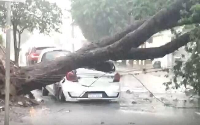 Chuva causa alagamentos e derruba rvore em Americana