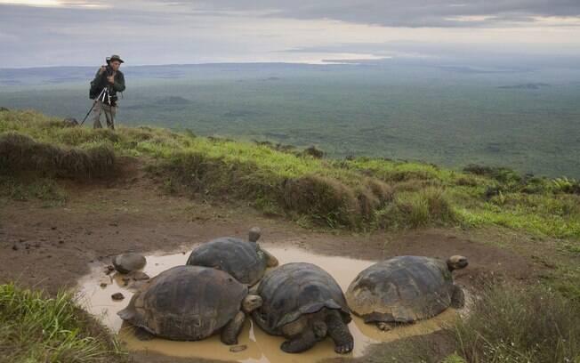 Galápagos é um dos melhores locais para ver a vida selvagem de pertinho