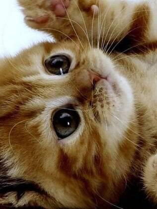 Um filhote de gato tem muita energia