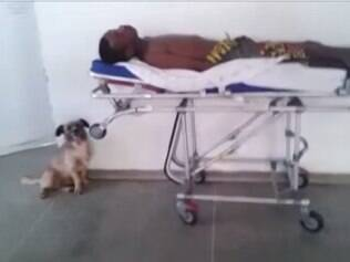 Cãozinho ficou ao lado da maca do paciente durante todo o atendimento
