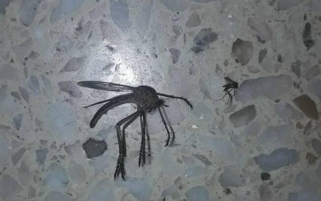 Animal foi morto com inseticida.