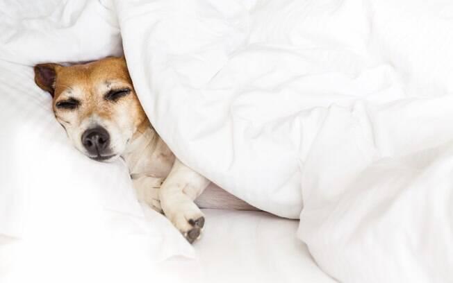 A leishmaniose visceral canina é uma das doenças de cachorro mais perigosa