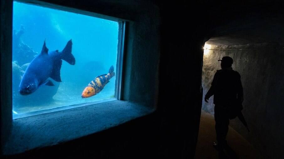 O Aquário Subterrâneo no Parque da Luz é um espaço pequeno, mas vale a pena conhecer