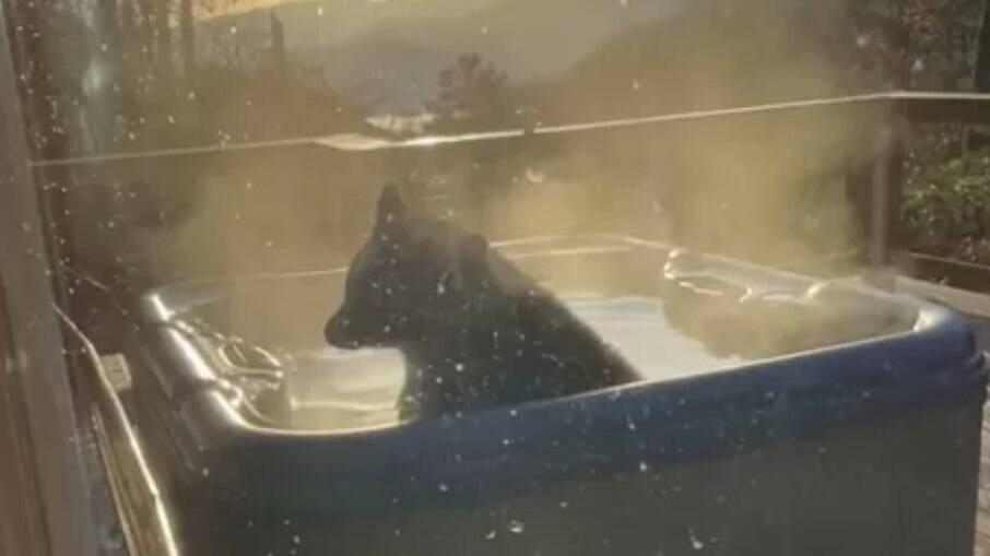 O animal decidiu invadir a cabana e tomar um banho de banheira